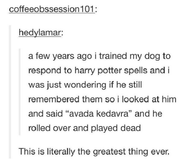Magically Funny Harry Potter Memes And Tumblr Posts