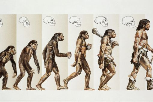 Drawings of evolution of humans from apes