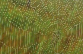 Spider web.