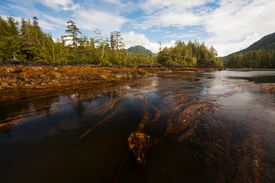 Bull Kelp Forest, Vancouver Island, Canada