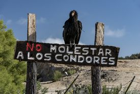 Don't bother the condors