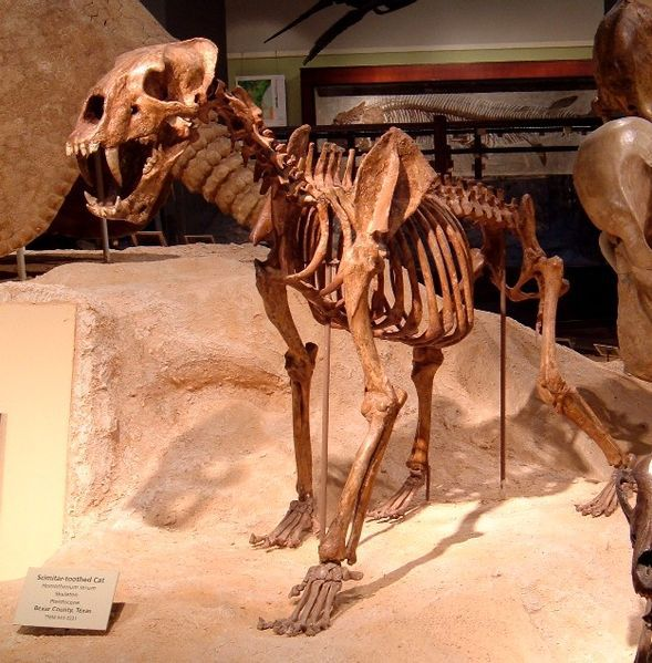 homotherium