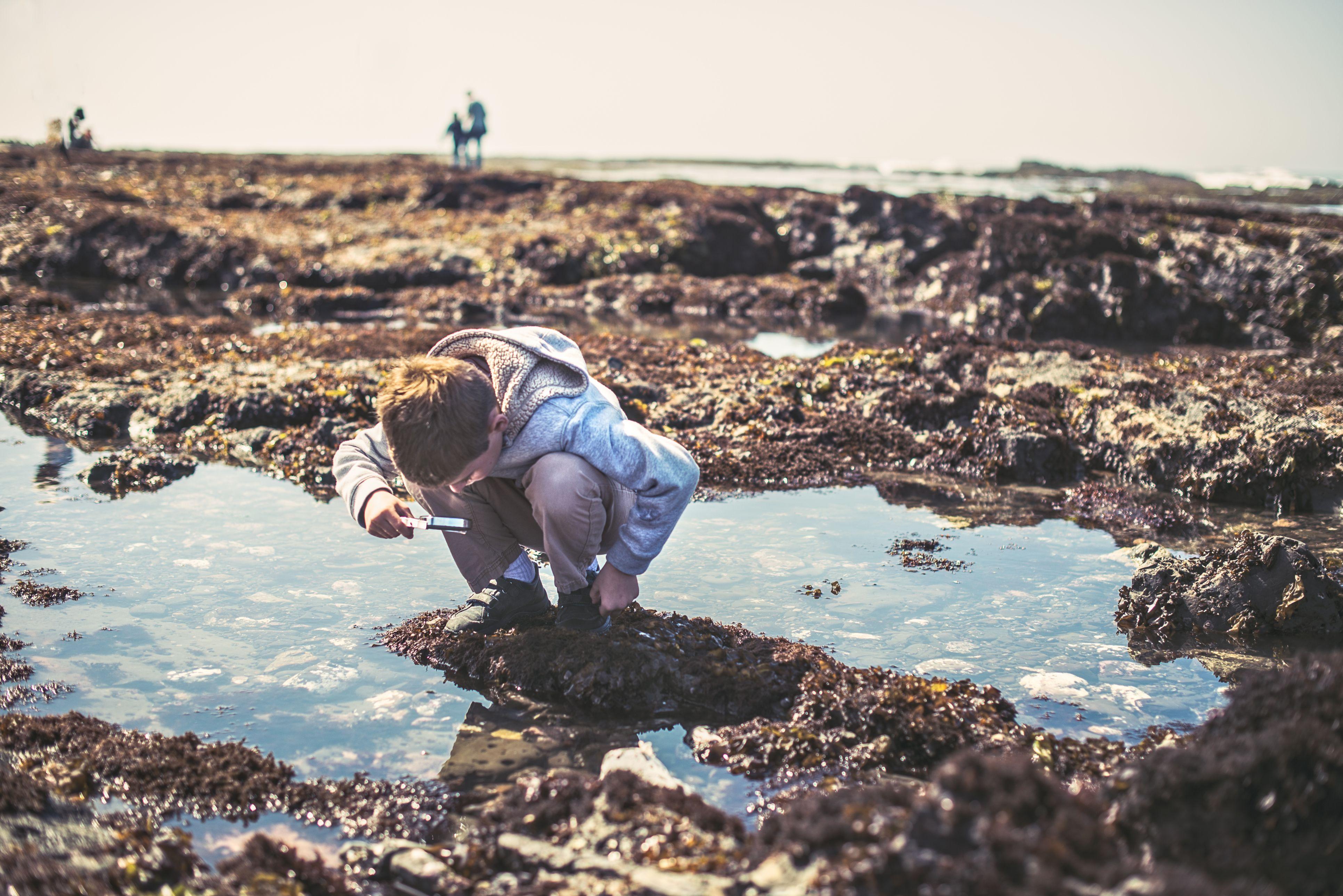 Boy Looks At Tide Pools