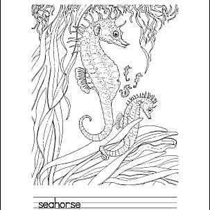 Seahorse Printables 4