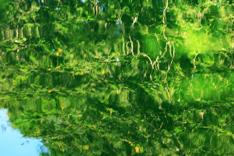 a lake with green foliage reflected