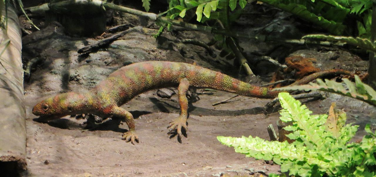 A model of a <i>Hylonomus</i>, the first true reptile, which lived during the Late Carboniferous period