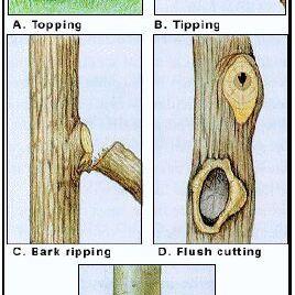 Harmful Pruning Cuts