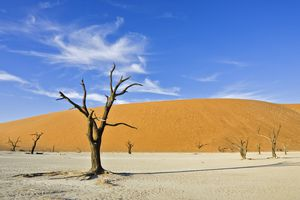 Dead trees on a dried up clay pan in Deadvlei, Namib Desert, Namibia, Africa