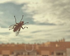 Close-Up of Housefly on Glass Window