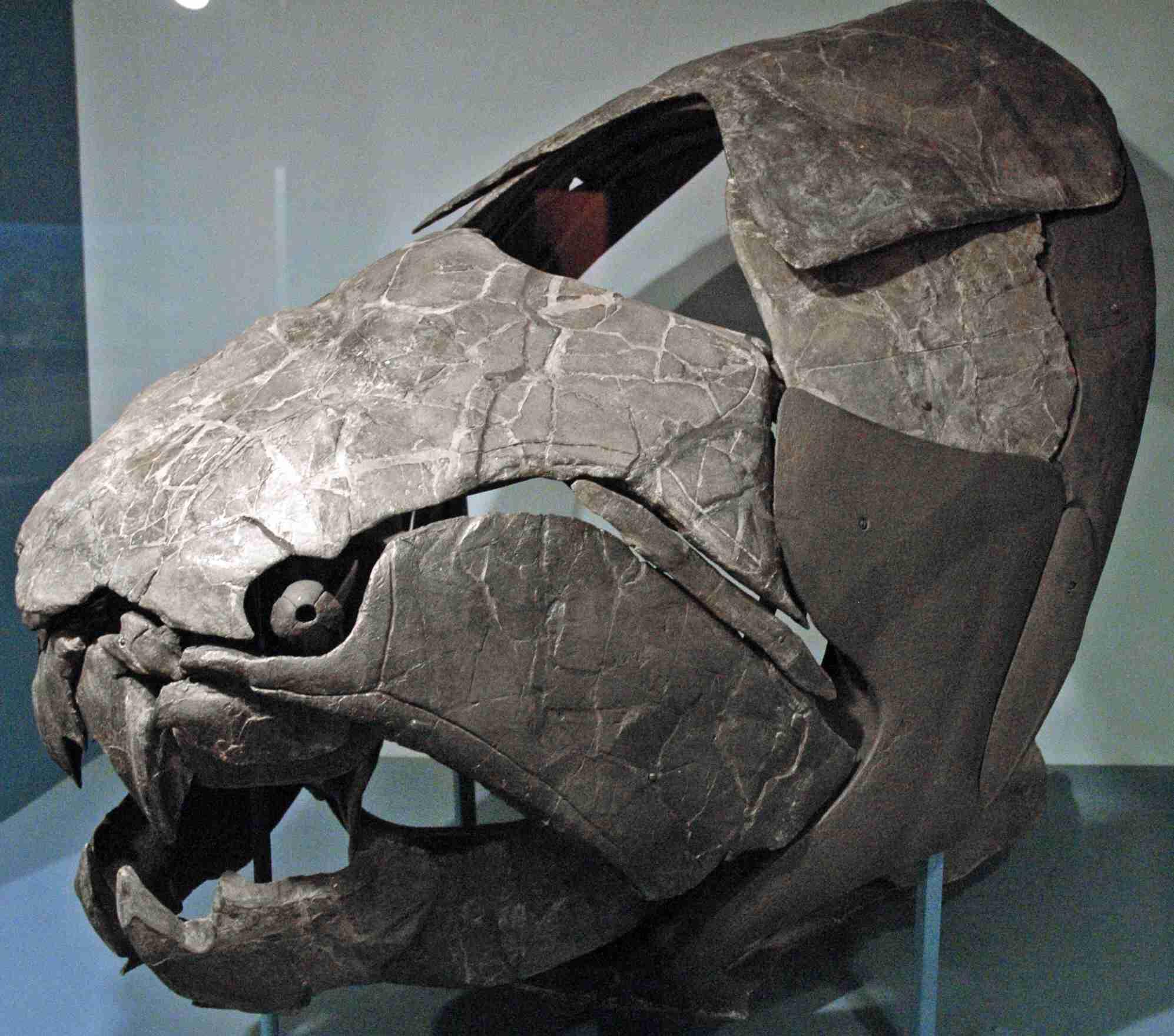 Dunkleosteus terrelli (fossil fish)