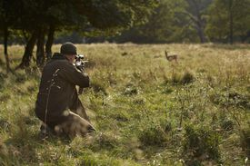 Male hunter aiming at a deer with a rifle