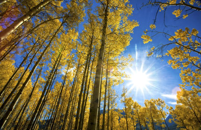 blue sky and sun through foliage