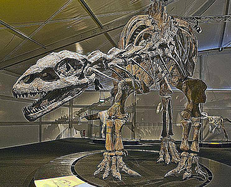 PIctures and Profiles of Prosauropod Dinosaurs