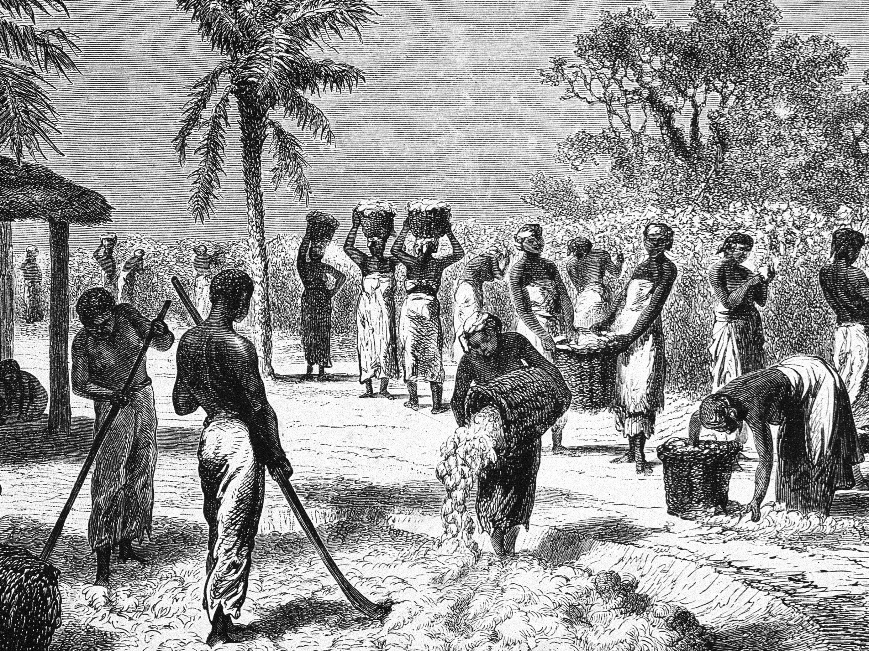The Biography of a Revolutionary Fiber Cotton