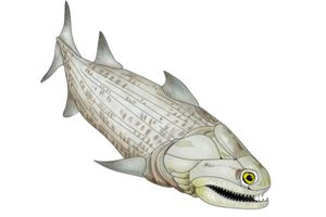 andreolepis
