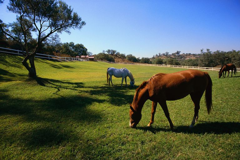 Horses grazing on a ranch