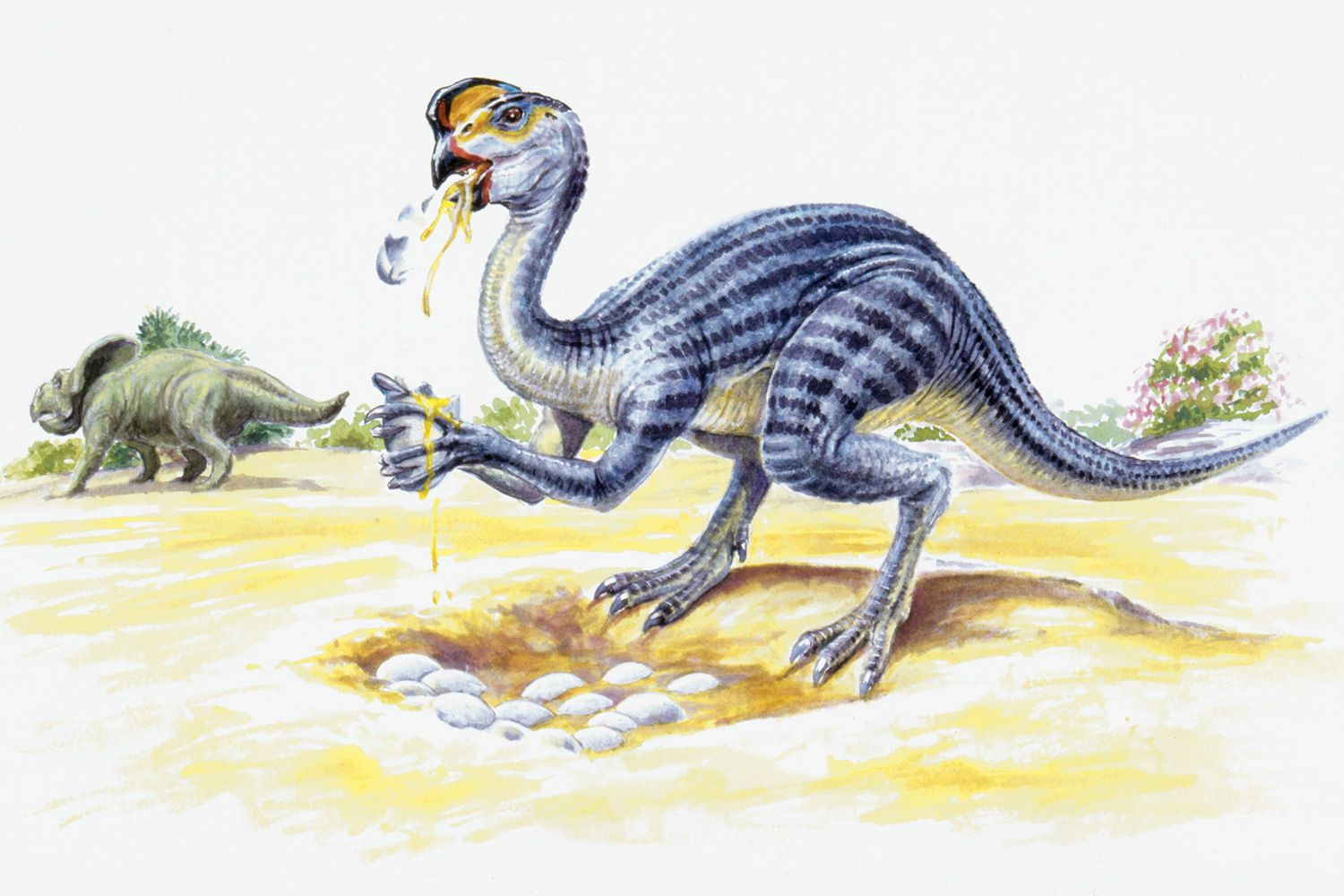 From Sauropods to Tyrannosaurs: The 15 Main Dinosaur Types