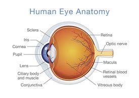 labeled diagram of eye