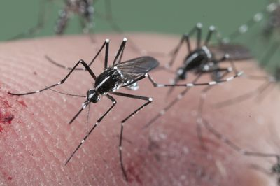 Insects Commonly Mistaken For Mosquitoes
