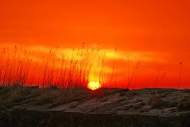 Sun rising over a wheat field.