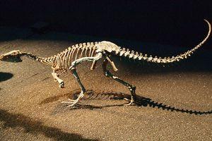 eoraptor