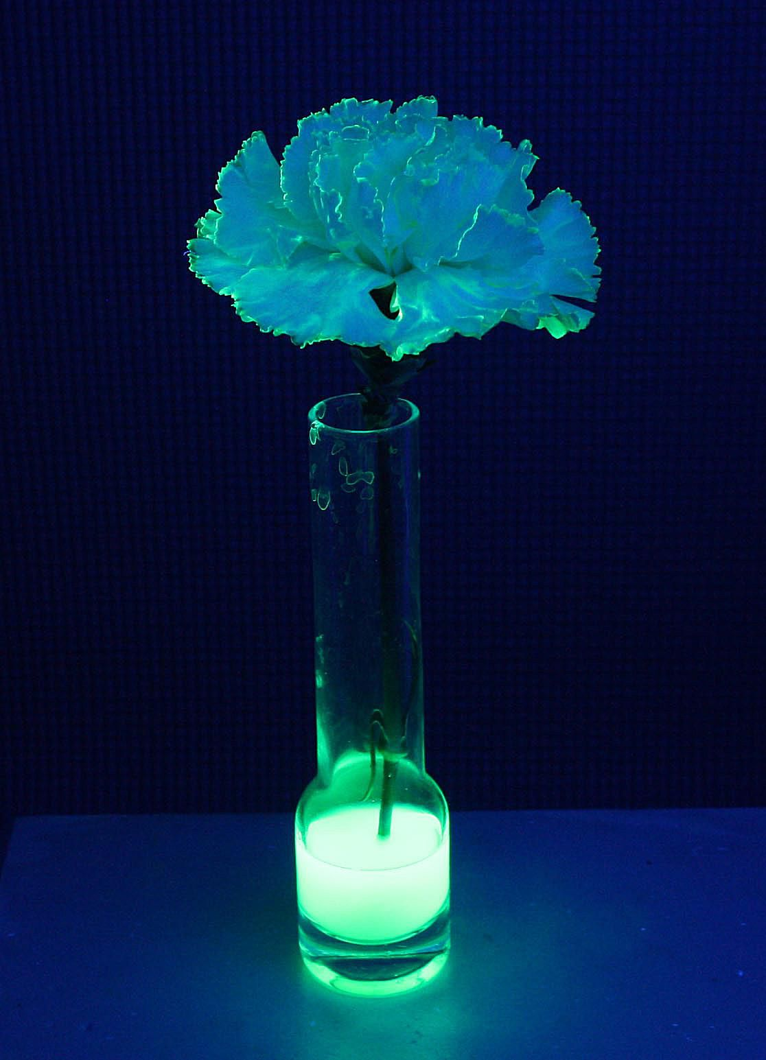 Tonic water, which contains quinine, was used to impart a blue glow to this carnation.