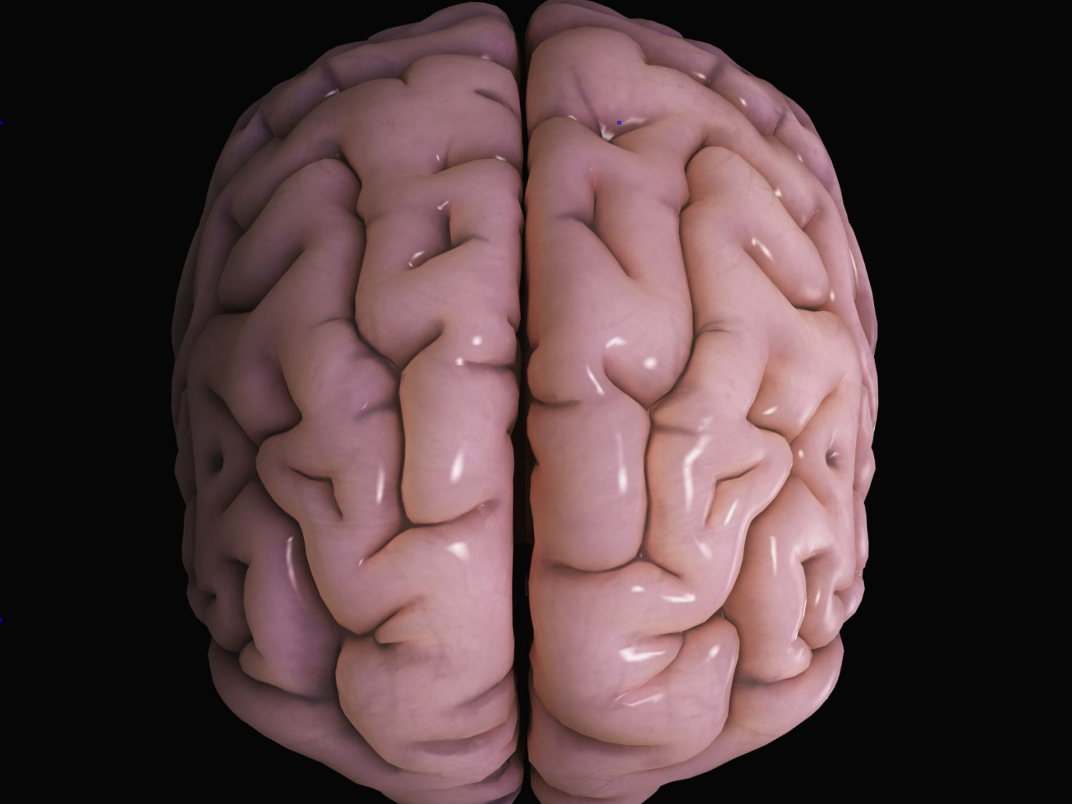 What Does the Brain's Cerebral Cortex Do?
