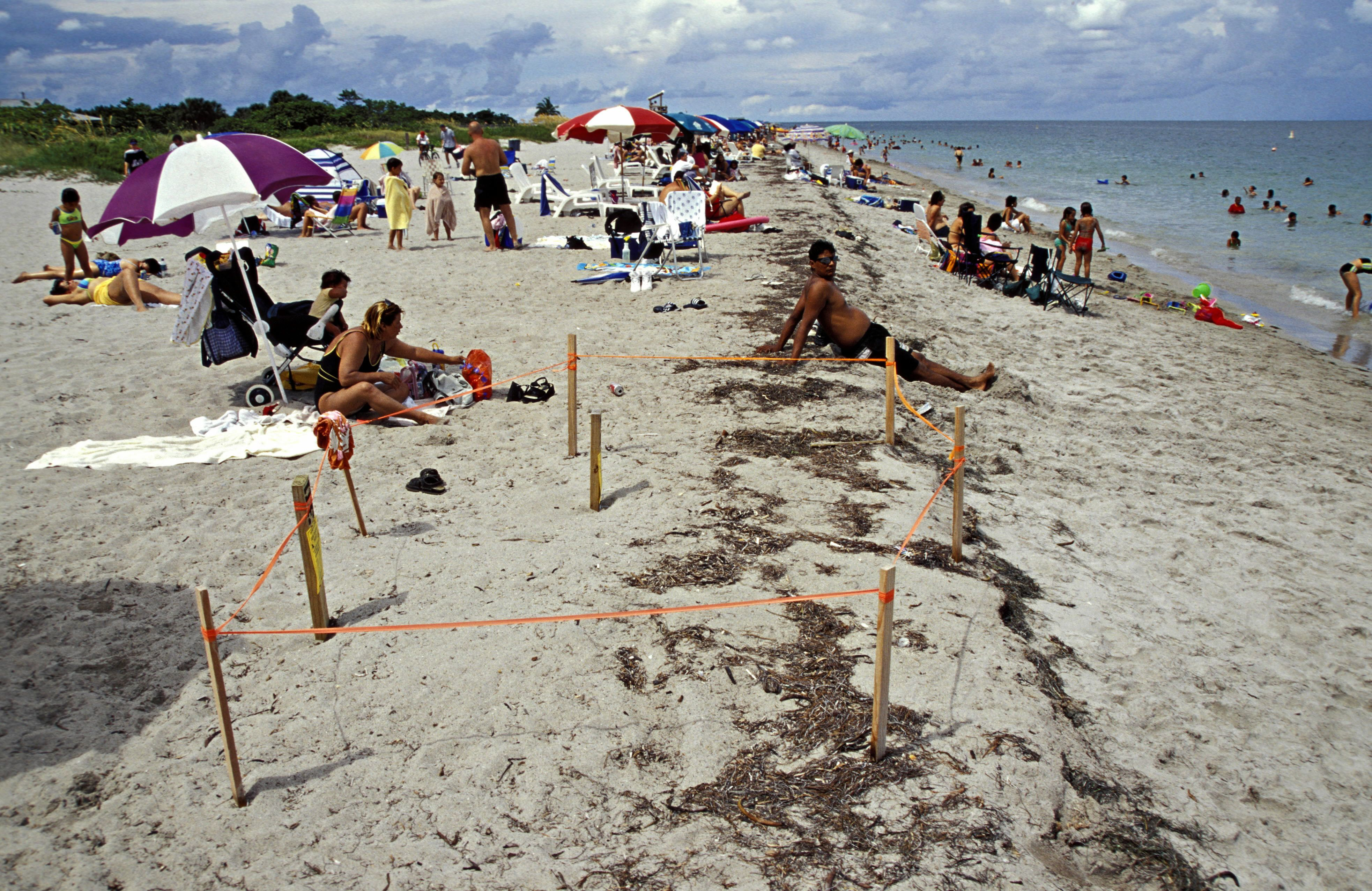 Protected sea turtle nest site on crowded beach in Key Biscayne, FL