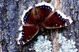 Butterfly feeding on tree sap.