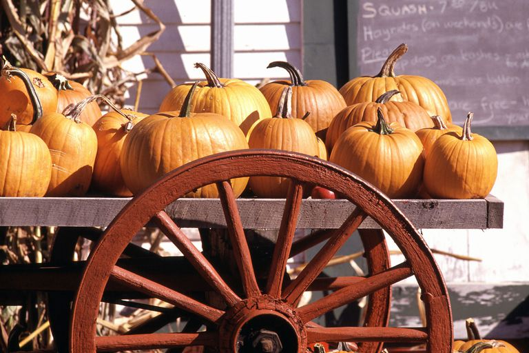 Pumpkins on a Cart