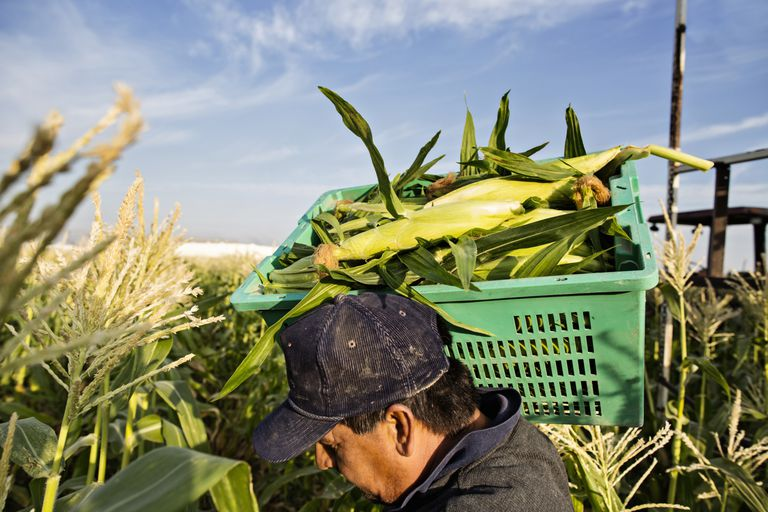 Los trabajadores agrícolas temporeros en Estados Unidos tienen derechos que no pueden ser violados