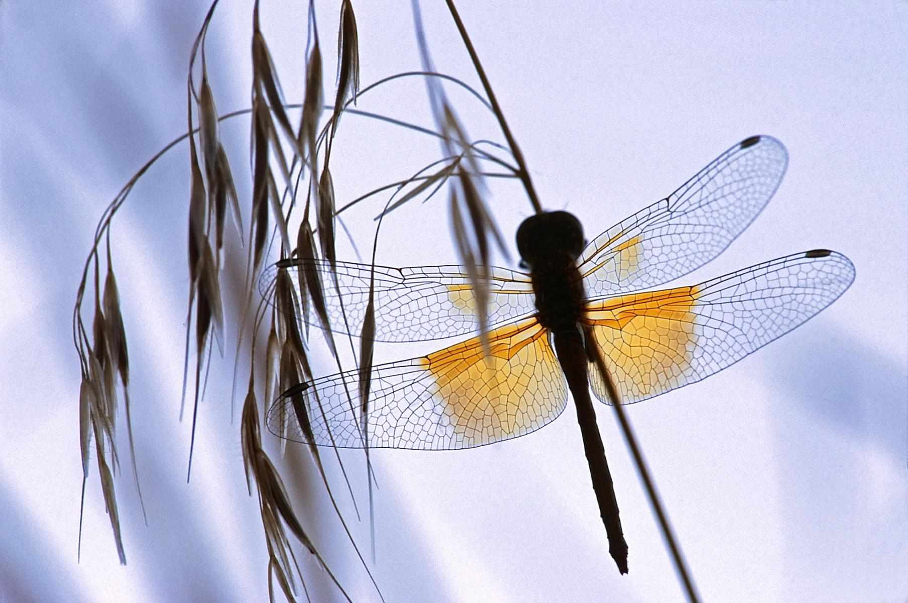 Insects And Arachnids As Spiritual Totems