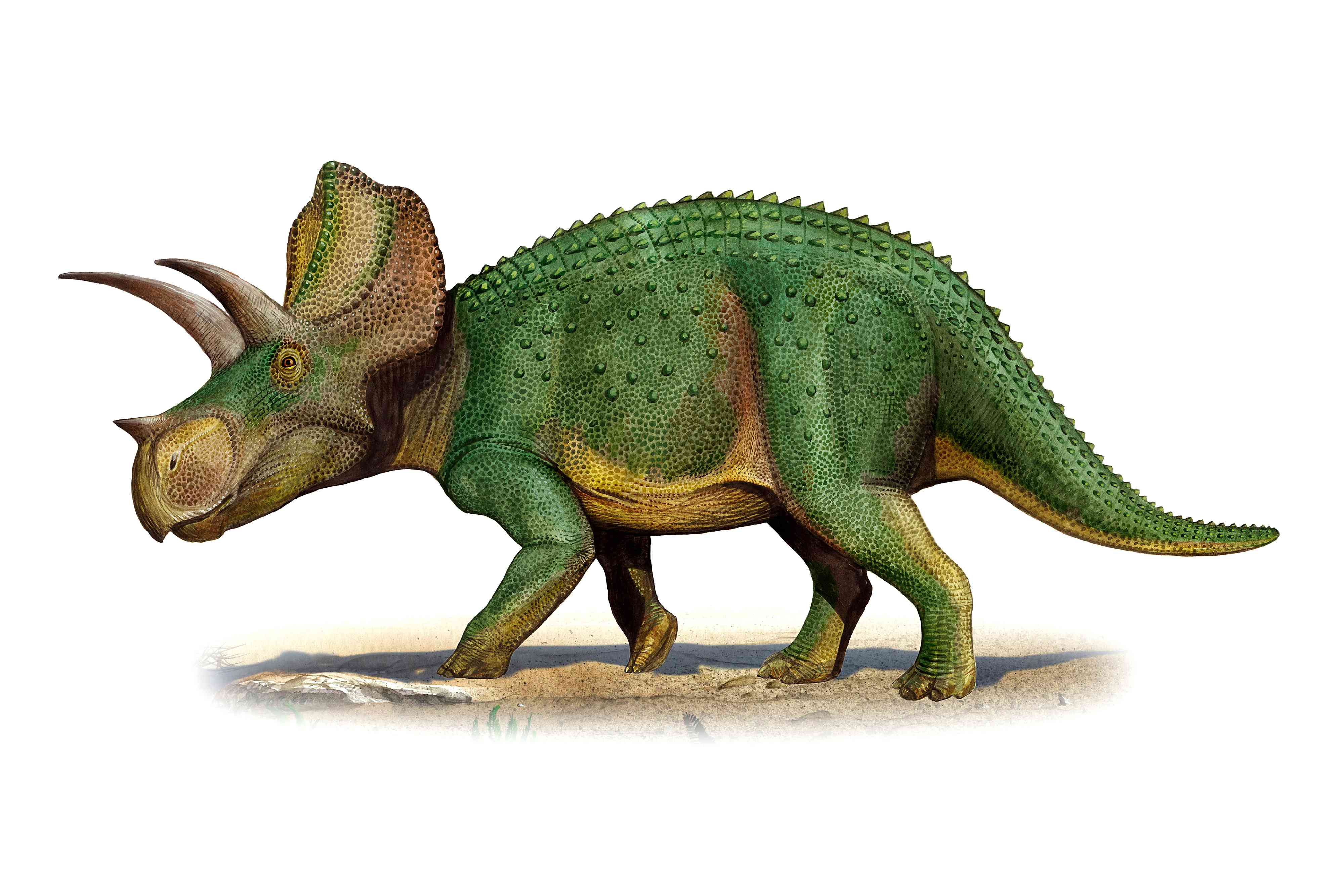Ojoceratops fowleri, a Late Cretaceous-era dinosaur whose fossil remains were found in New Mexico