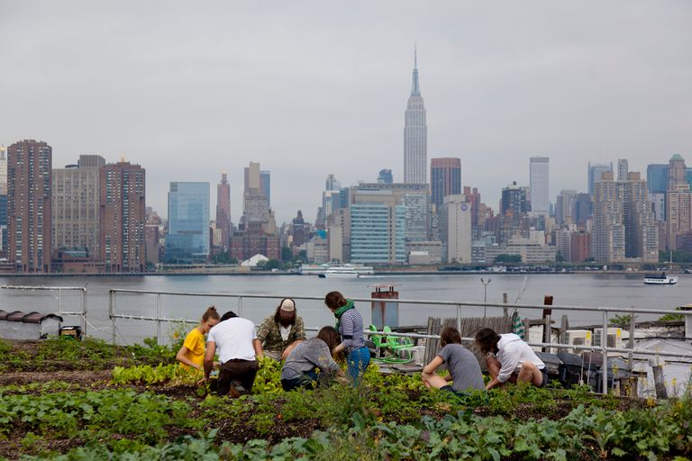 A Rooftop Garden Affect in NYC.