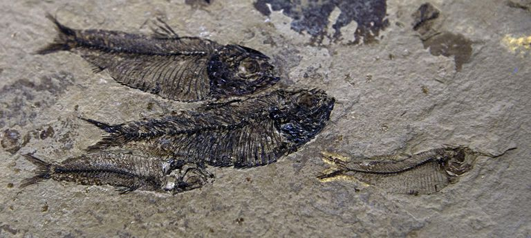 How Fossil Evidence Supports Evolution