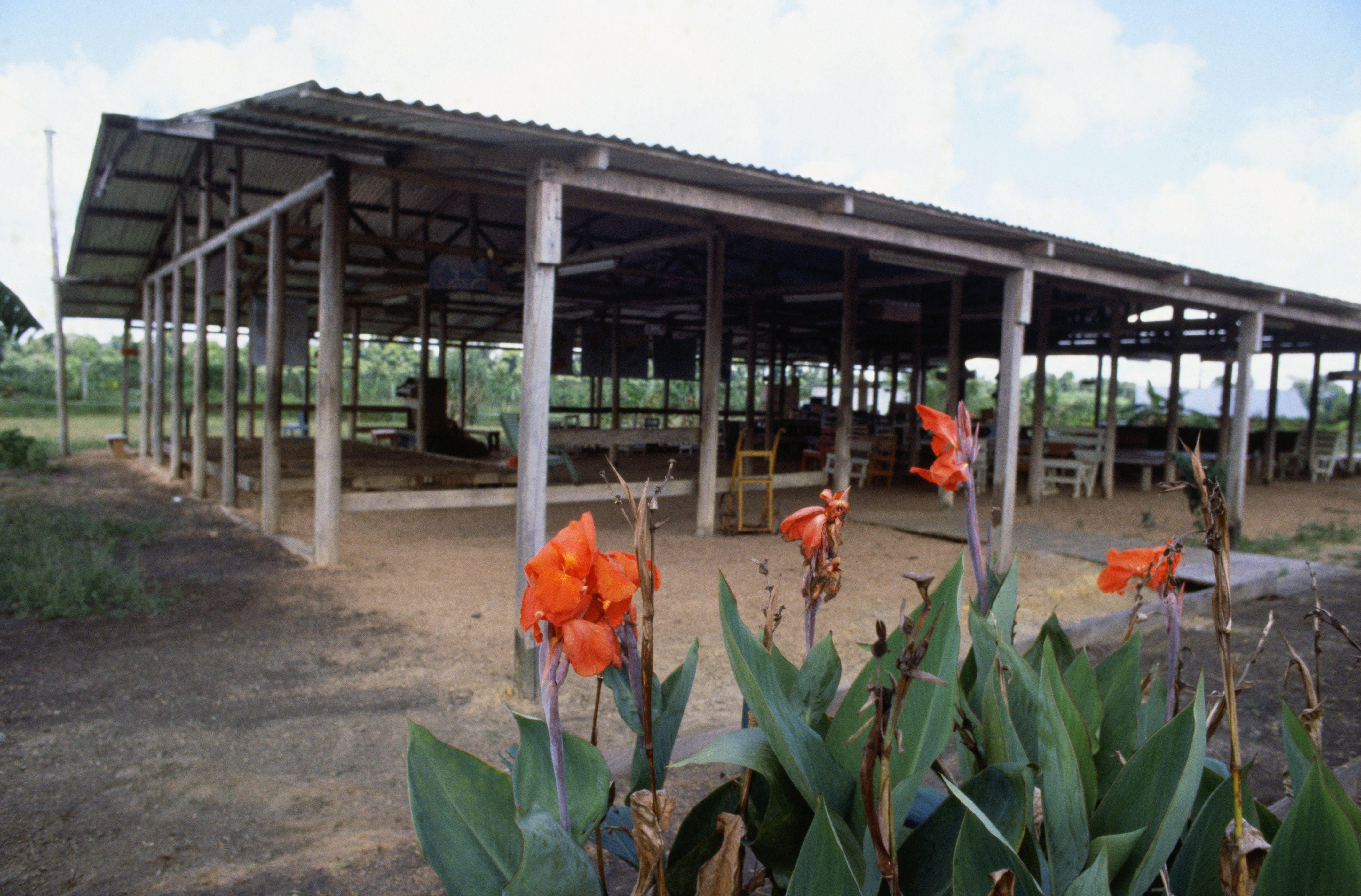 Flowers Growing by abandoned Jonestown Pavilion.