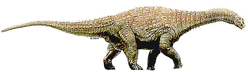 diamantinasaurus