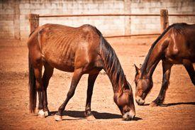 Thin Horses