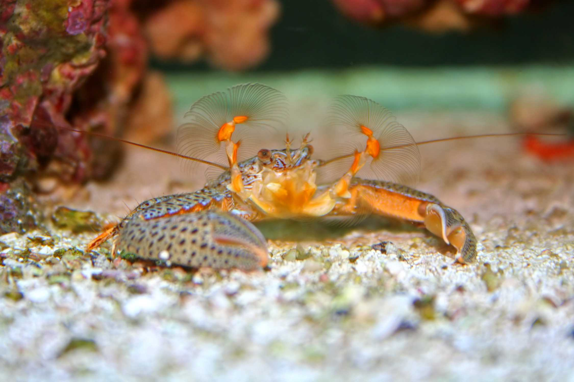 Arthropod Pictures Hexapods Myriapods And More