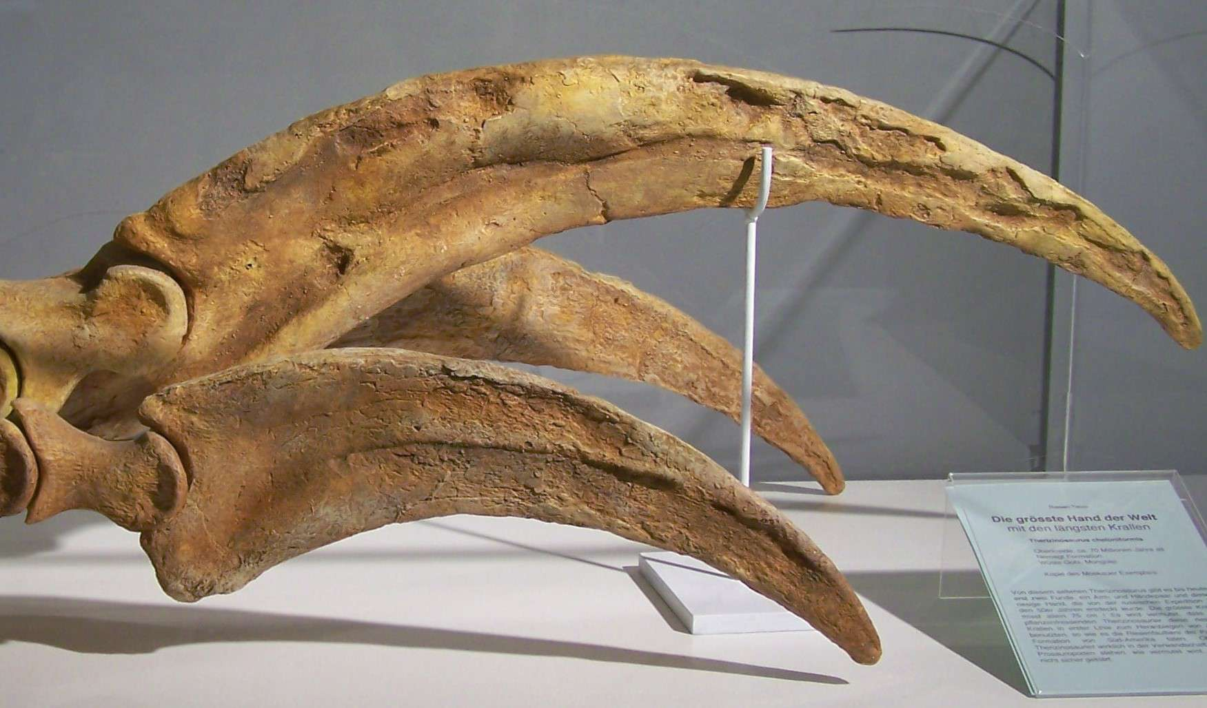 Therizinosaurus hand and claws