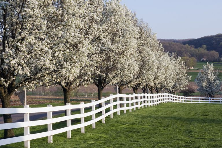 When To Consider Planting A Flowering Dogwood Tree
