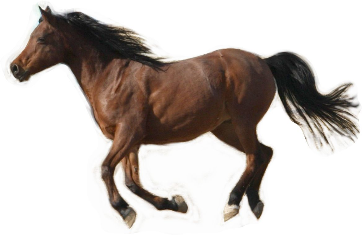 learn how to sketch a running horse
