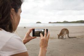 Wallabies on the Beach at Cape Hillsborough