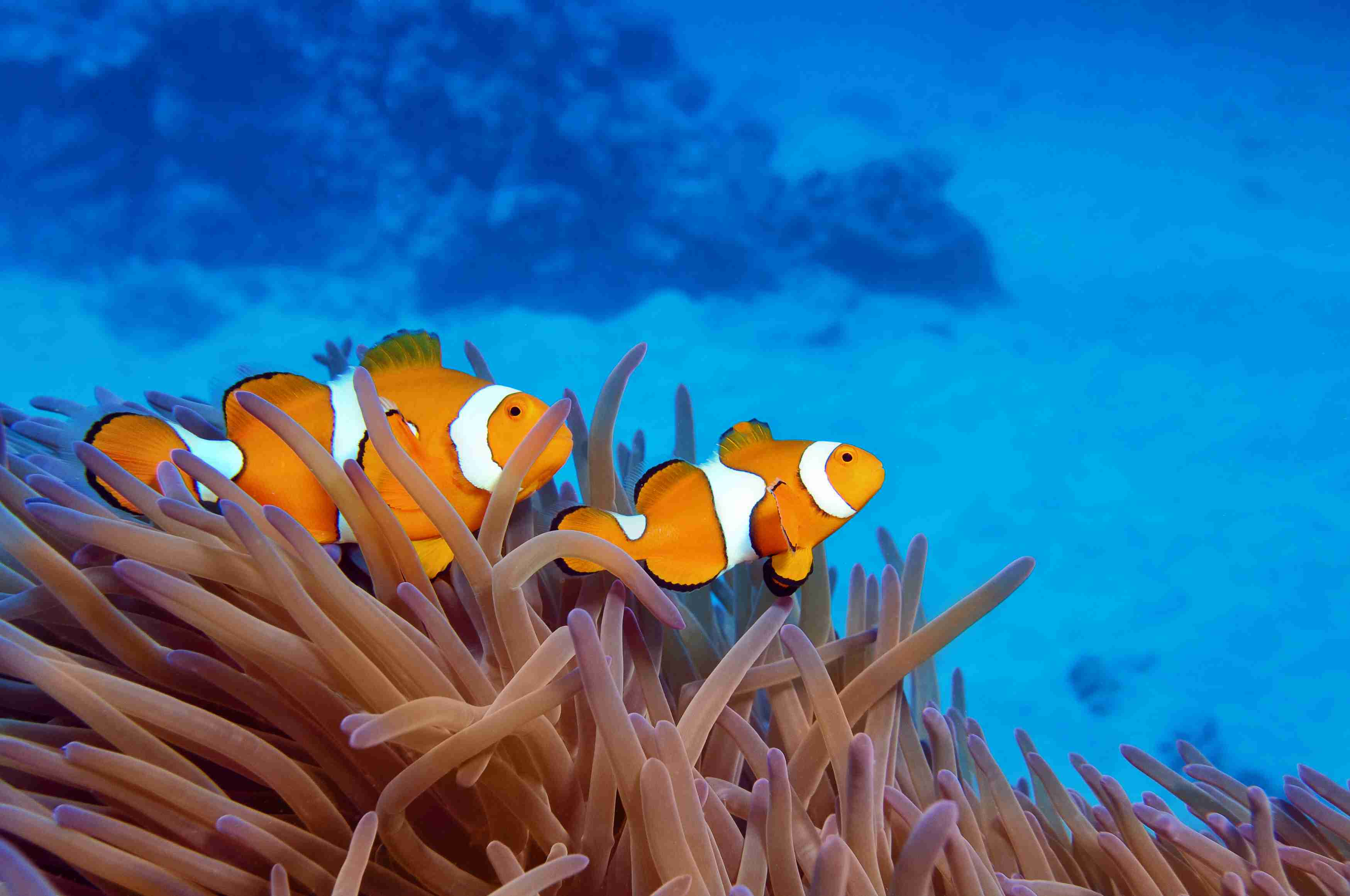 The Animals of the Great Barrier Reef - photo#1