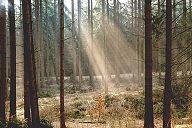 German Tree Plantation