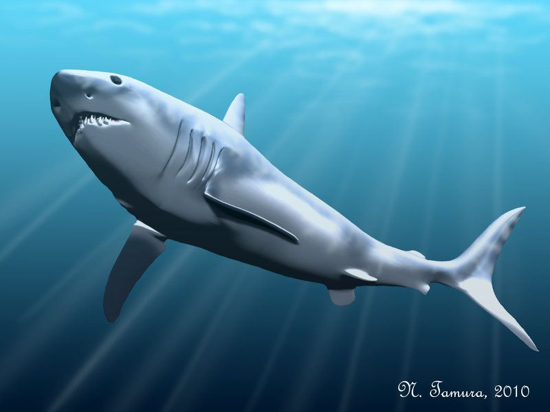 Megalodon, clamping its jaws shut