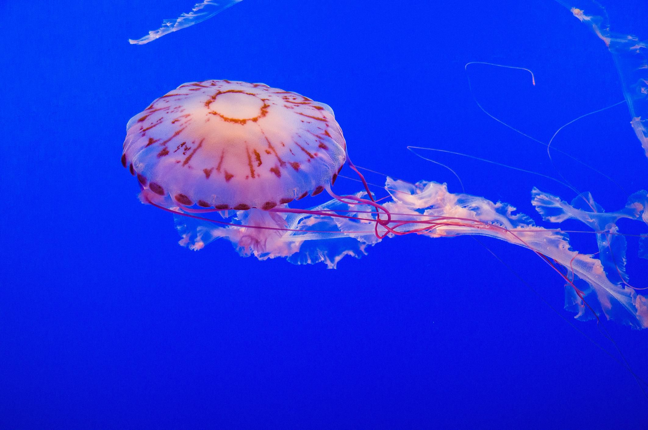Cnidaria Facts and Information