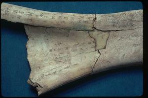 Close up of Shang Dynasty Oracle Bone