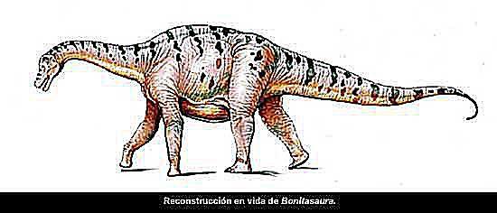 bonitasaura