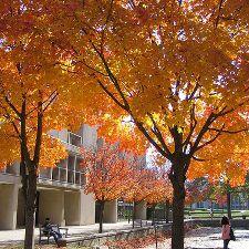 UMBC in Autumn